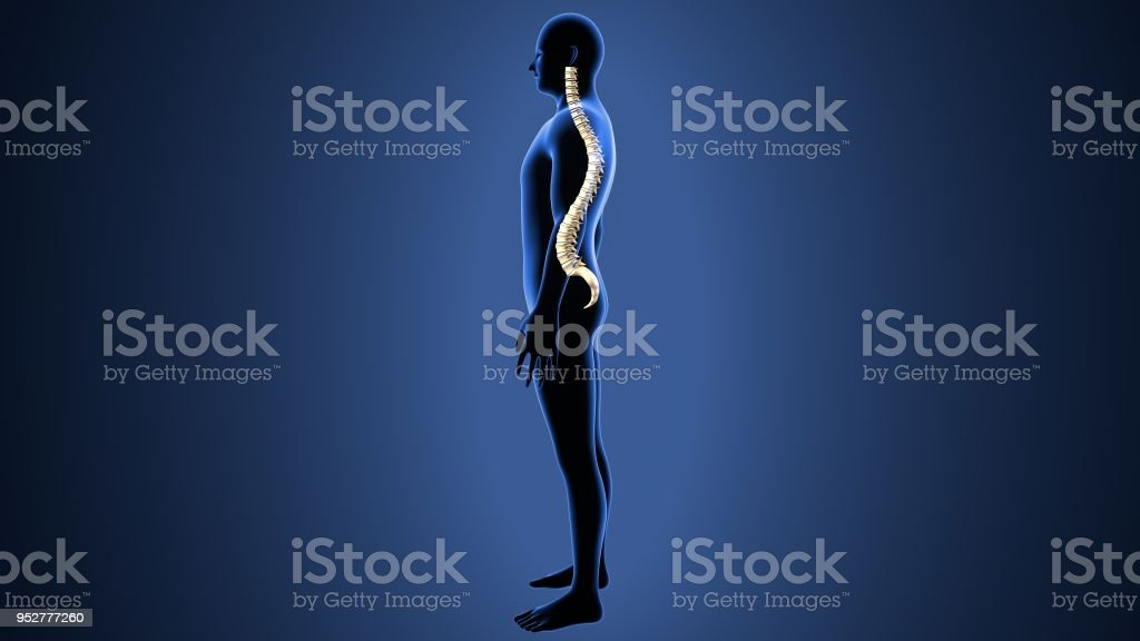 3d Abbildung Des Menschlichen Körpers Wirbelsäule Knochen Anatomie ...
