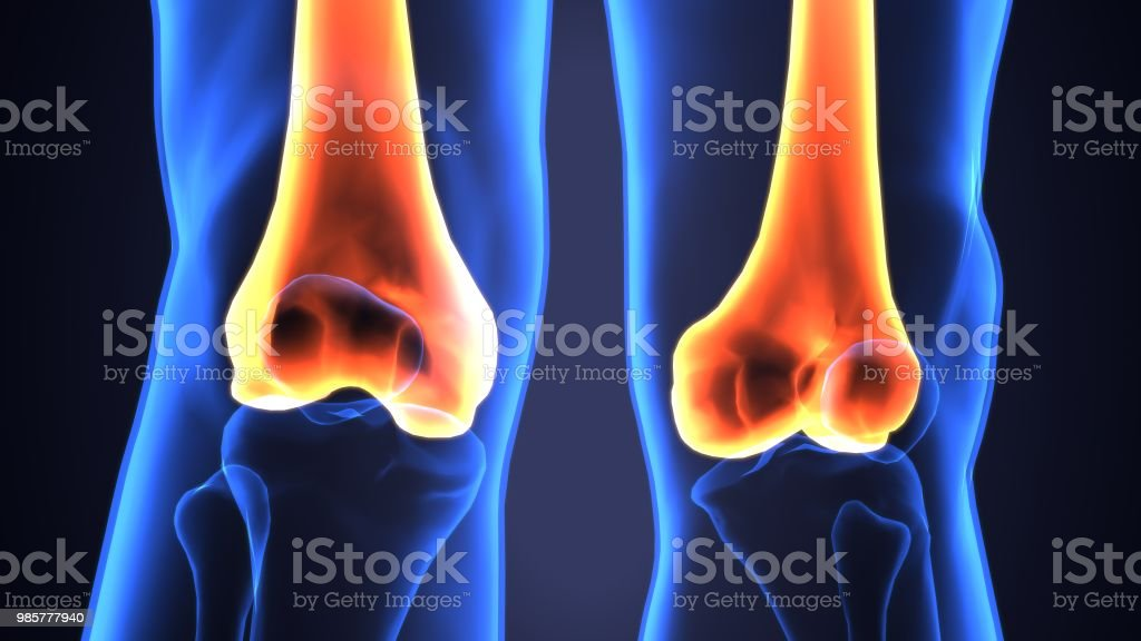 3d Illustration Of Human Femur Bones Anatomy Stock Photo More