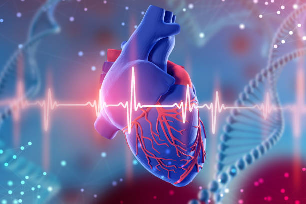 3d illustration of human heart and cardiogram on futuristic blue background. digital technologies in medicine - cardiovascular system stock pictures, royalty-free photos & images