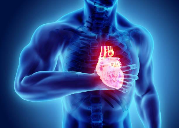 3D illustration d'arrêt cardiaque humaine. - Photo