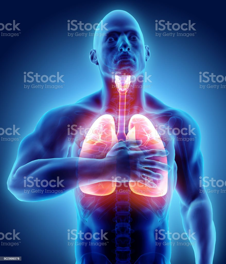 3d illustration of Lungs and chest painful, medical healthcare. stock photo