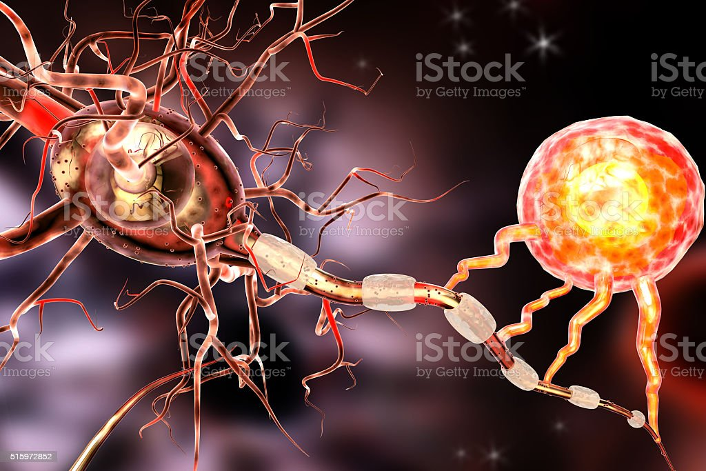 3d illustration of nerve cells stock photo
