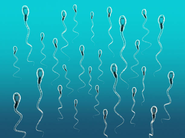3d illustration of sperm cells moving to the right - spermicide stock photos and pictures