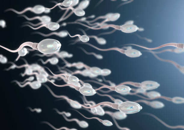 3d illustration of sperm cells moving to the right stock photo
