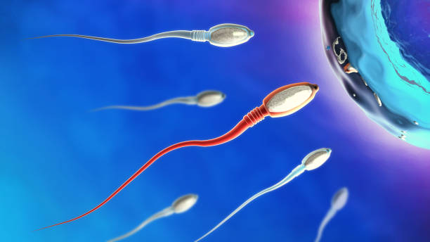 3d illustration of sperm cells moving to the right towards egg cell stock photo