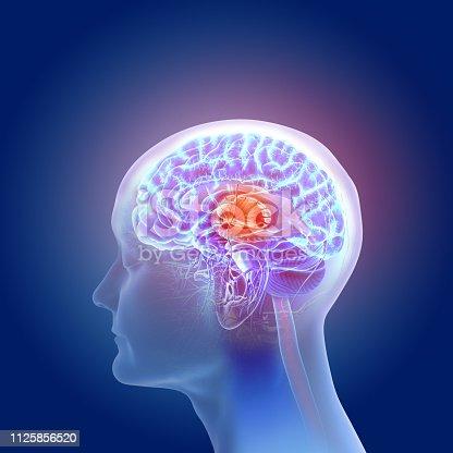 istock 3d illustration of the human brain anatomy 1125856520
