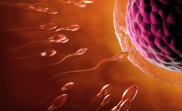 3d illustration of transparent sperm cells swimming towards egg cell - sperm stock pictures, royalty-free photos & images