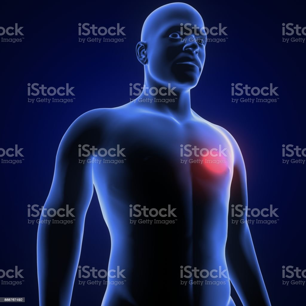3d Illustraton Des Menschlichen Körpersherzschmerz - Stockfoto | iStock