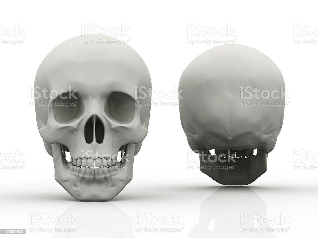 3 D Bild Von Menschlicher Schädel In Voller Gesicht Profil Stock ...
