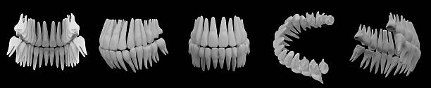 3d image of white teeth isolated on black – Foto