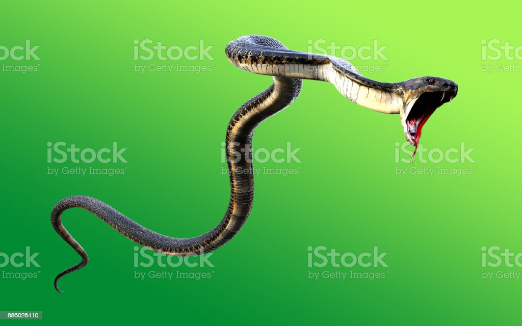 3d King Cobra Black Snake stock photo