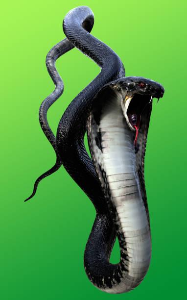 3d king cobra black snake - snake strike stock photos and pictures