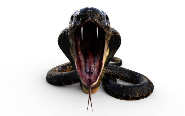 3D King Cobra Snake aanval foto