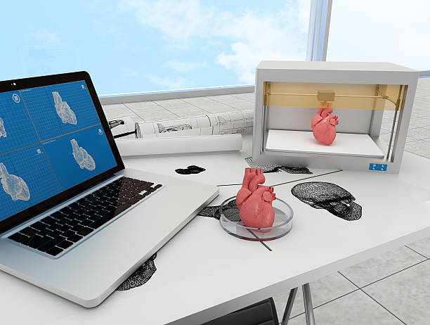 3d printed heart - heart internal organ stock photos and pictures
