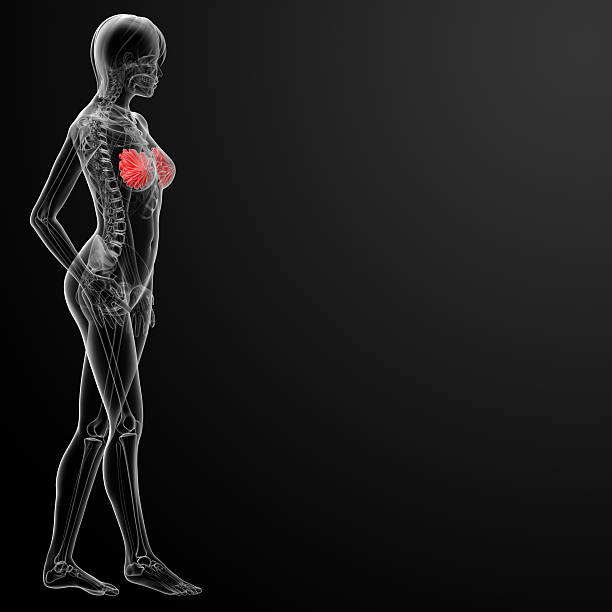 Royalty Free X Ray Image Women Anatomy Areola Pictures, Images and ...