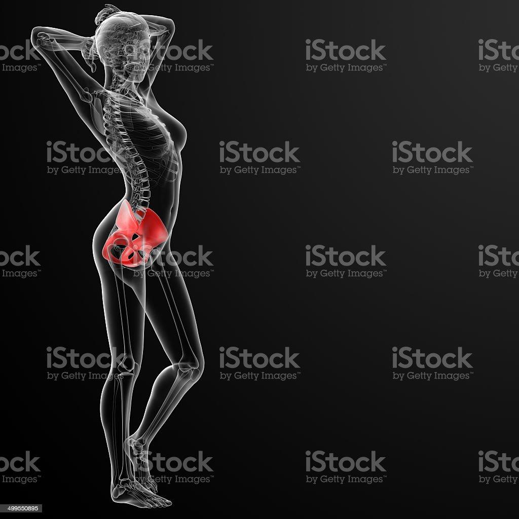 Fotografía de 3 D Render Hembra Pelvis ósea y más banco de imágenes ...