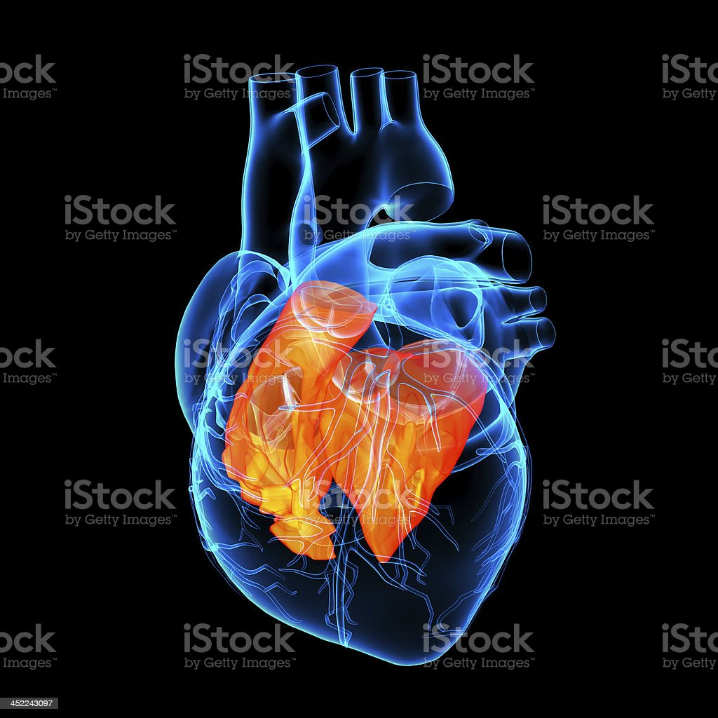 3d render Heart atrium stock photo