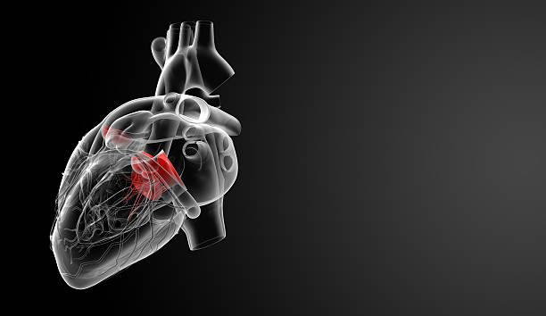3 d render Herzklappen – Foto