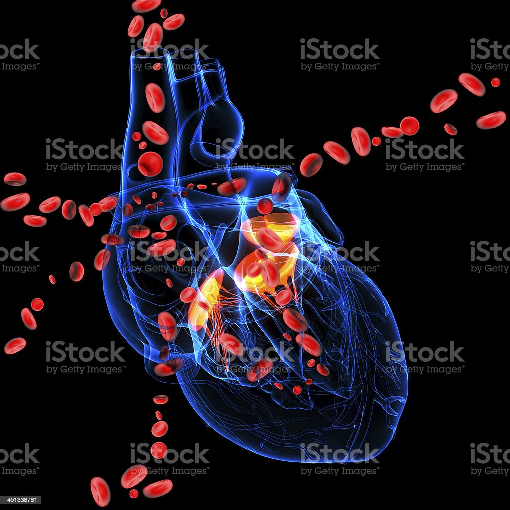 3d render Heart valve with blood cells stock photo