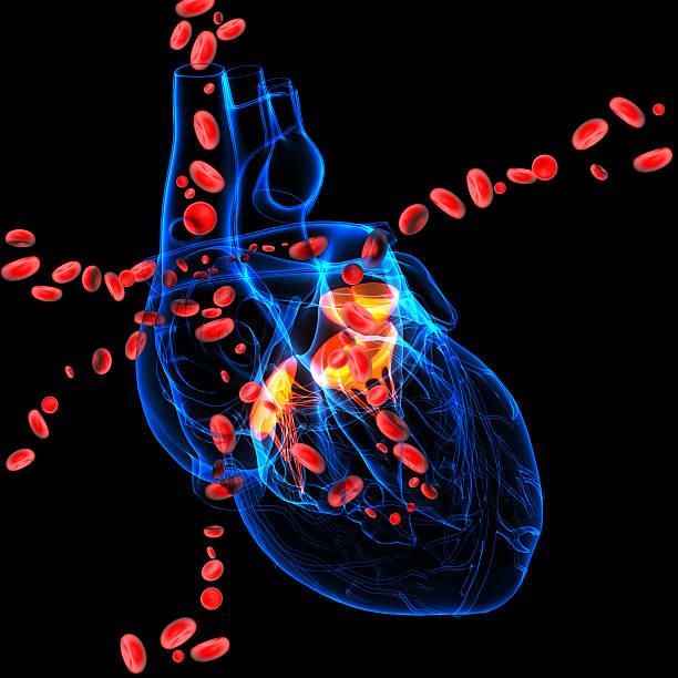 3 d render Herzklappen mit Blutkörperchen – Foto