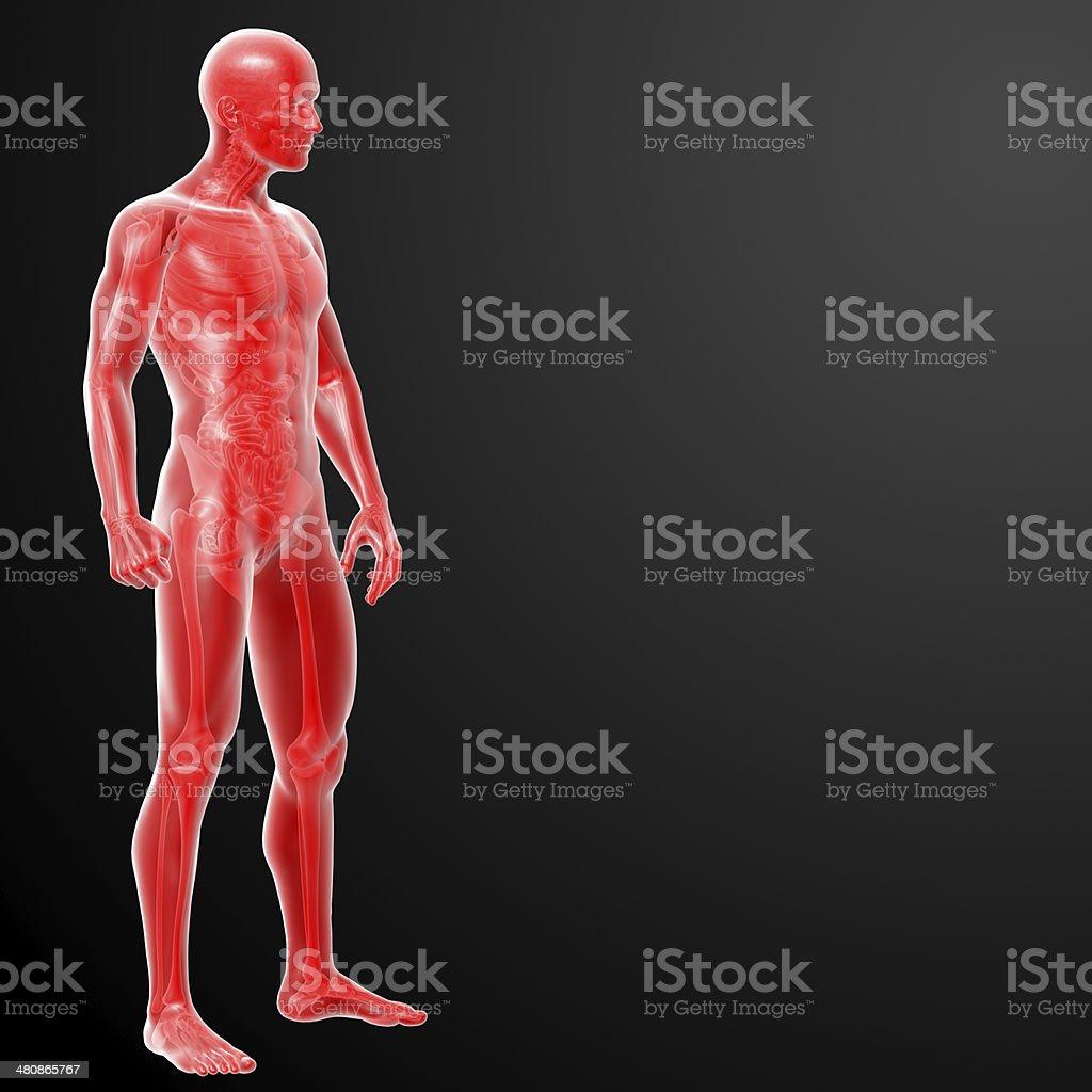 Fotografía de Renderizado 3d Anatomía Humana y más banco de imágenes ...