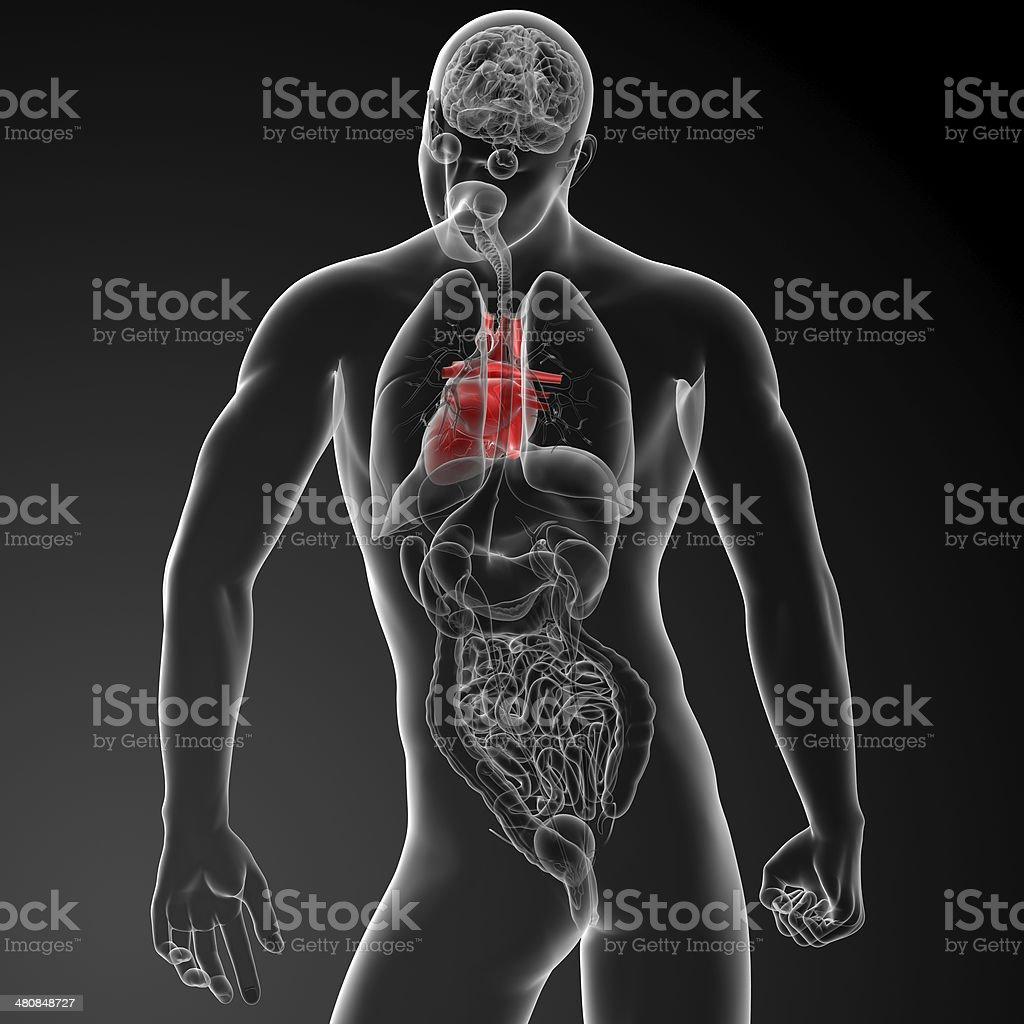 Großartig Thoraxdrainage Einsetzen Anatomie Zeitgenössisch ...
