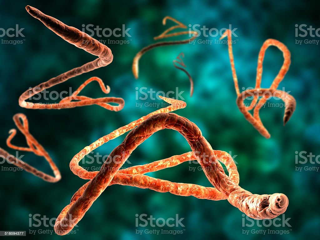 3d render, illustration of Ebola virus stock photo