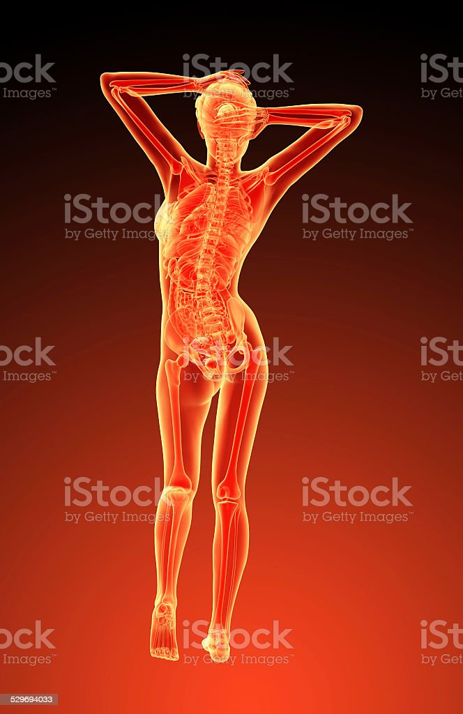 3d Render Illustration Of The Female Anatomy Stock Photo More