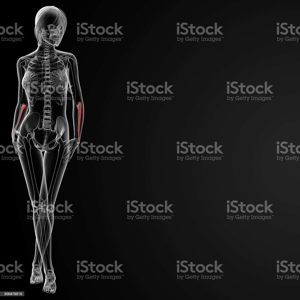 Ulna Diagram 3d Well Detailed Wiring Diagrams