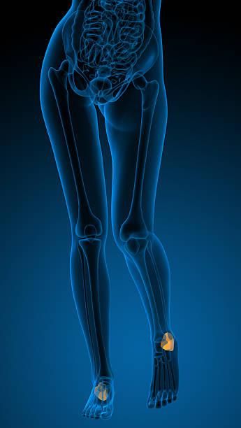 3 d render-illustration der menschlichen Fersenbein bone – Foto