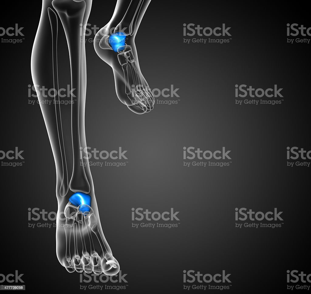 3d render illustration of the malleolus bone stock photo
