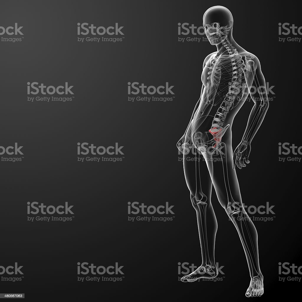 3d render illustration sacrum bone royalty-free stock photo