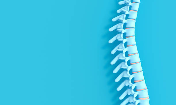 3d render image of a spine on a blue background. 3d render image of a spine on a blue background. concept of health and back problems. human vertebra stock pictures, royalty-free photos & images