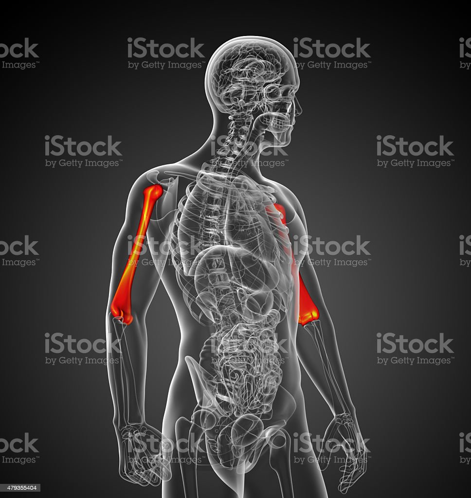 3d render medical 3d illustration of the humerus bone stock photo