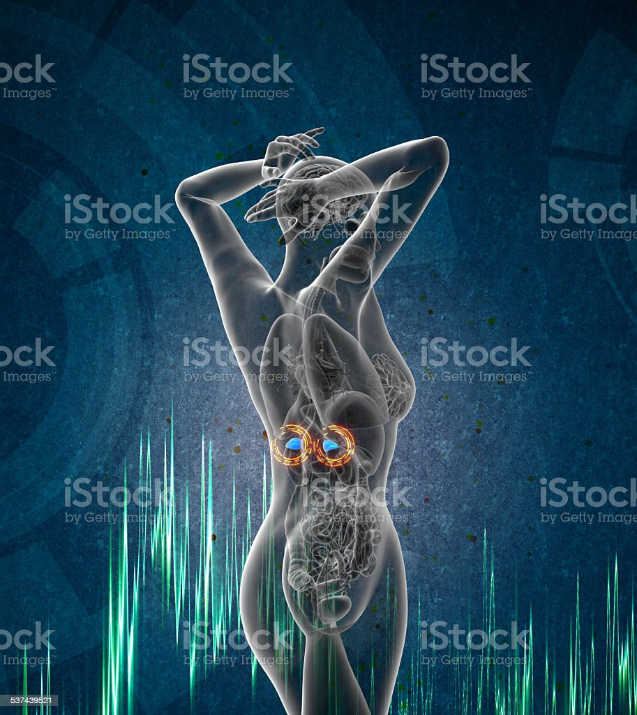 3d render medical illustration of the adrenal stock photo
