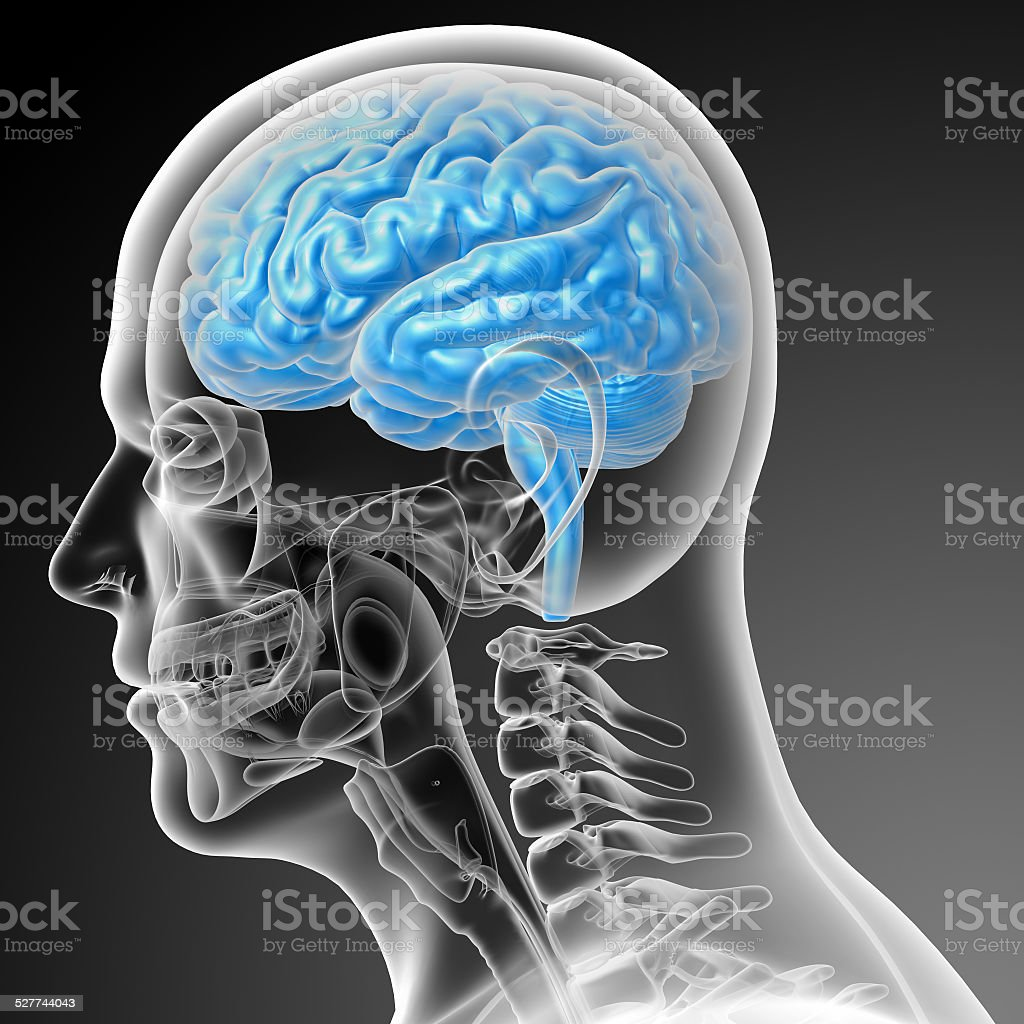 3d render medical illustration of the brain stock photo