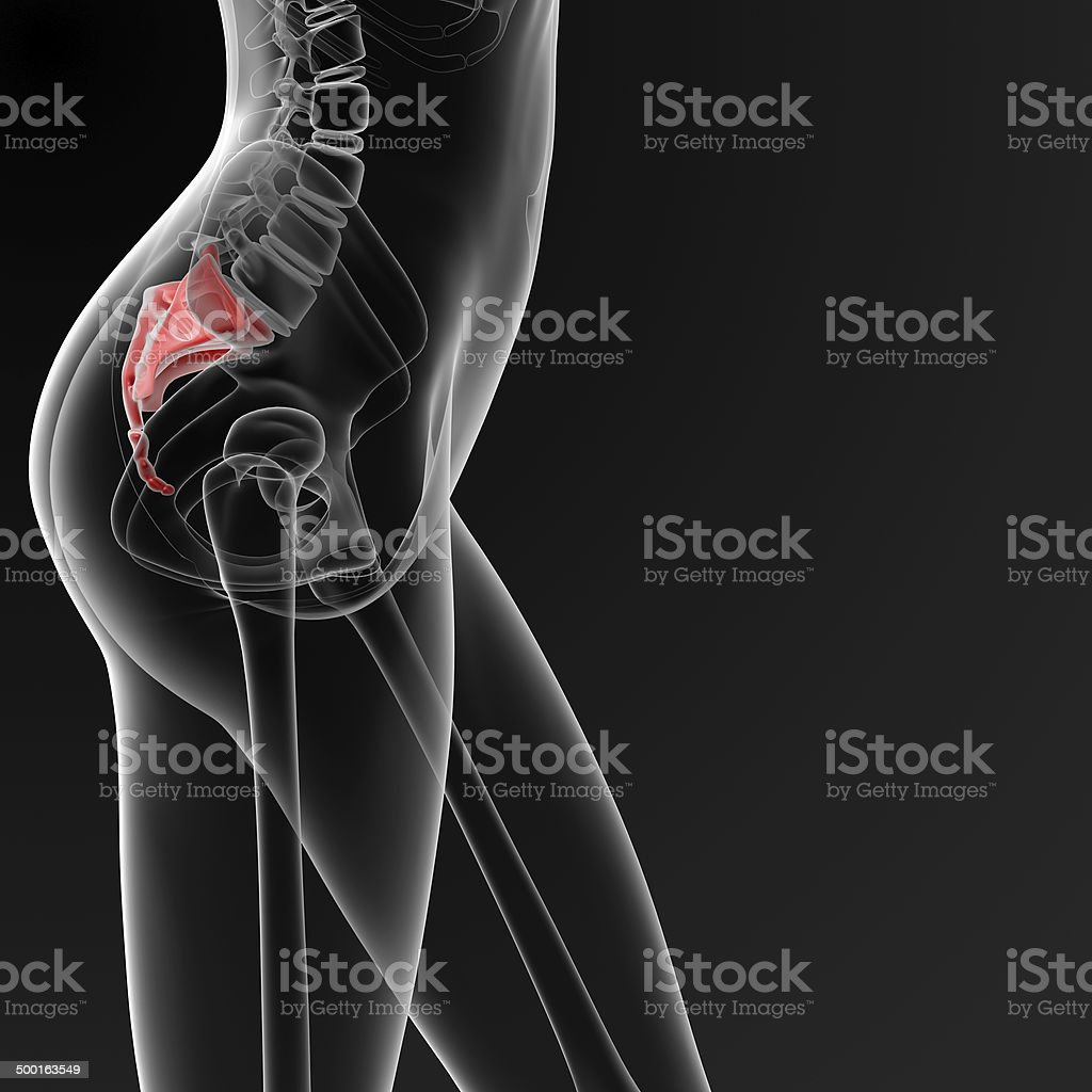 3d render medical illustration of the female sacrum bone stock photo