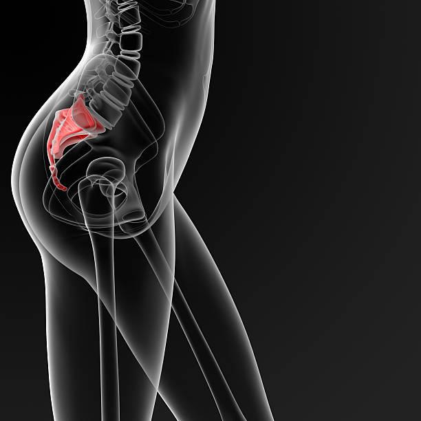 3 d render medizinische illustration der weiblichen Kreuzbein bone – Foto