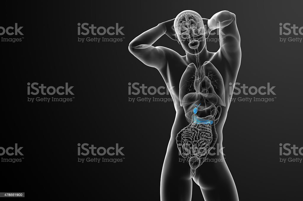 3d render medical illustration of the gallblader and pancrease stock photo