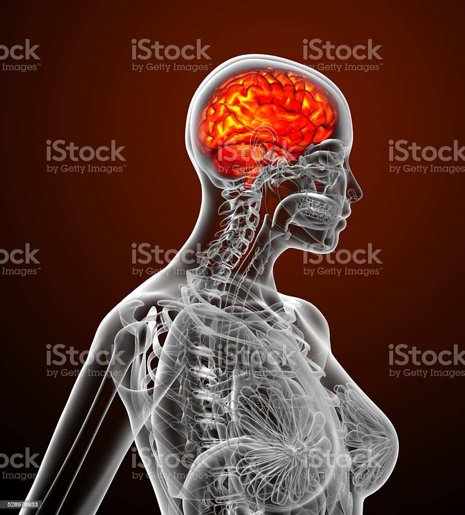 3d render medical illustration of the human brain stock photo