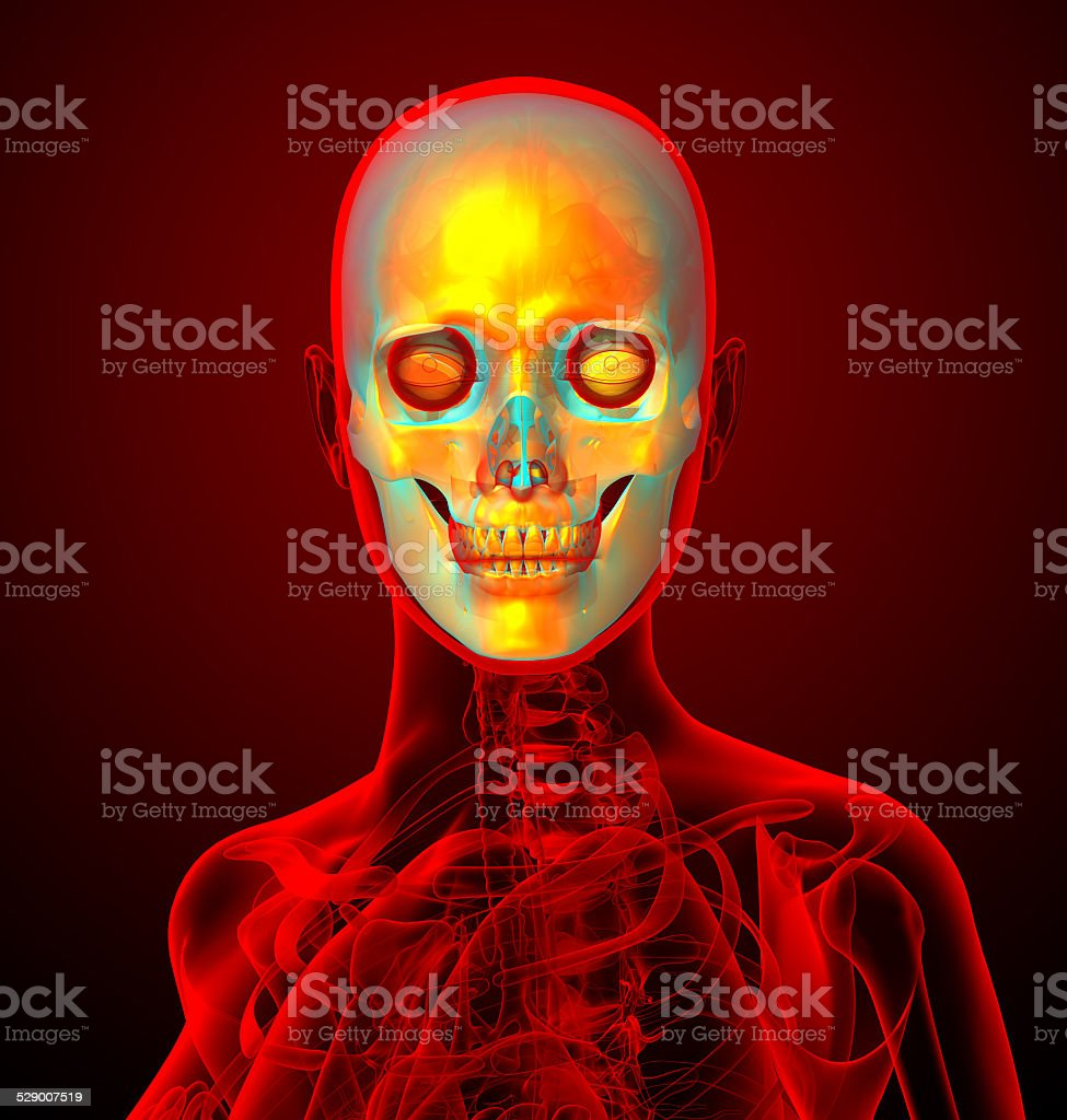 3d Render Medical Illustration Of The Human Sull Stock Photo