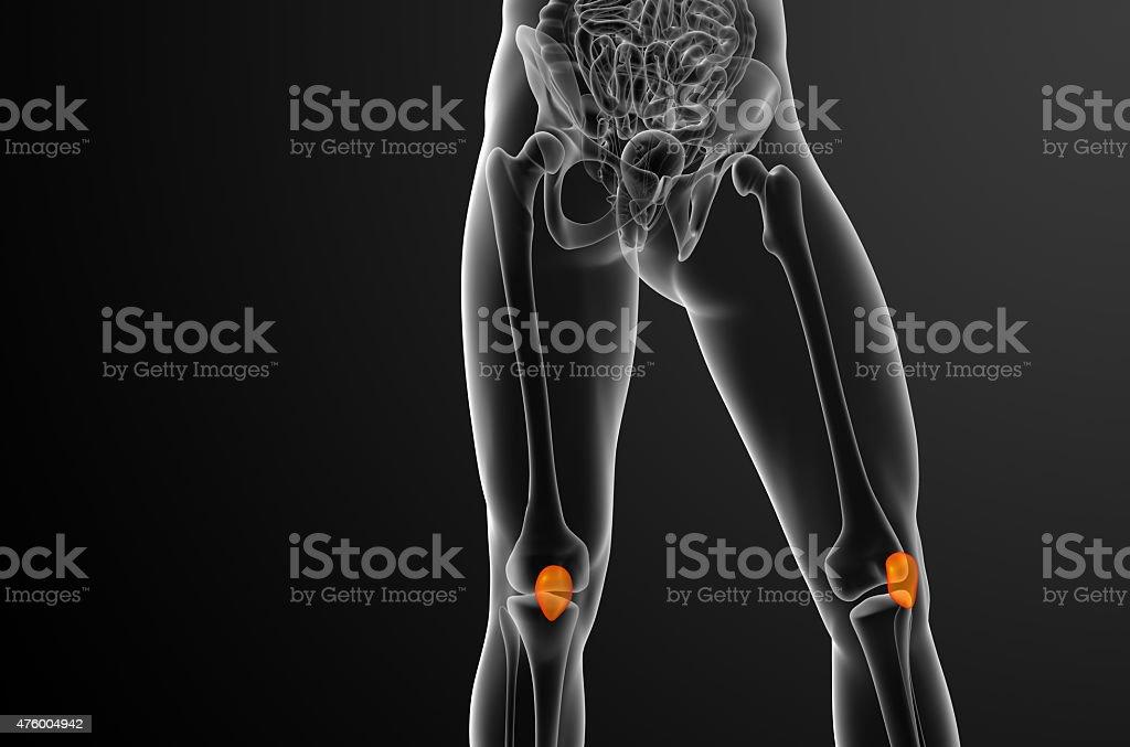 Großartig Tibia Kollateralband Fotos - Menschliche Anatomie Bilder ...