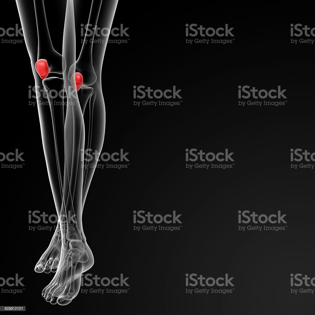 3d Render Medical Illustration Of The Patella Bone Stock Photo ...
