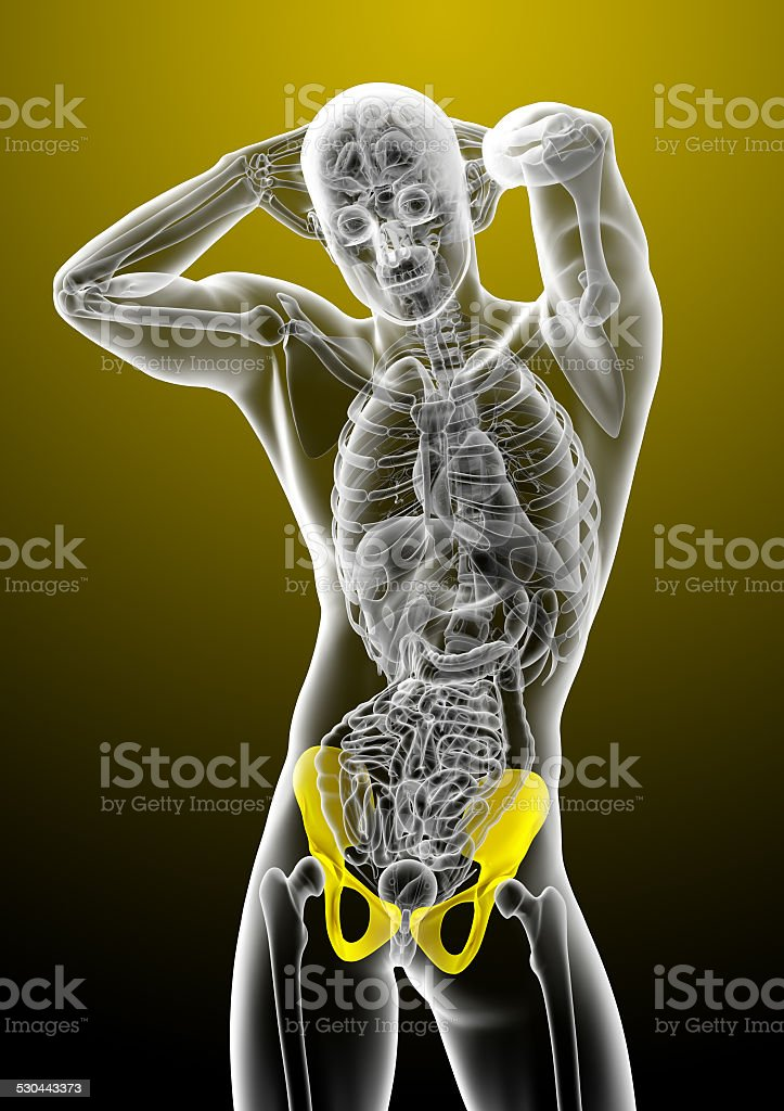 Fotografía de 3 D Render Medical Ilustración De La Pelvis ósea y más ...