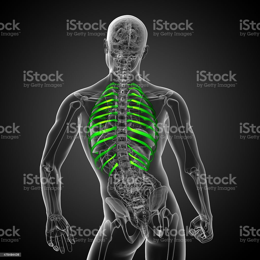 3d Render Medical Illustration Of The Ribcage Stock Photo Download