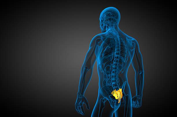 3 d render medizinische illustration der Kreuzbein bone – Foto