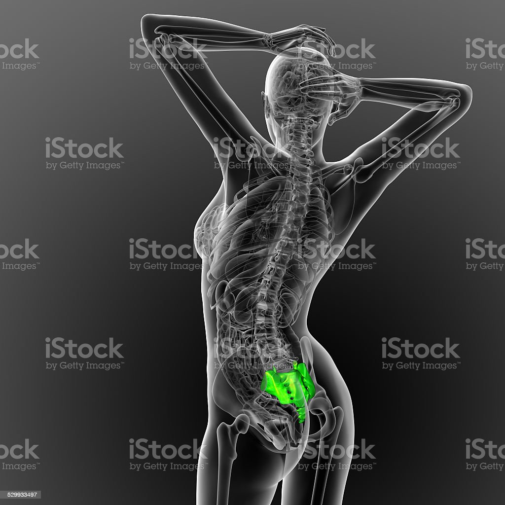 3d render medical illustration of the sacrum bone stock photo