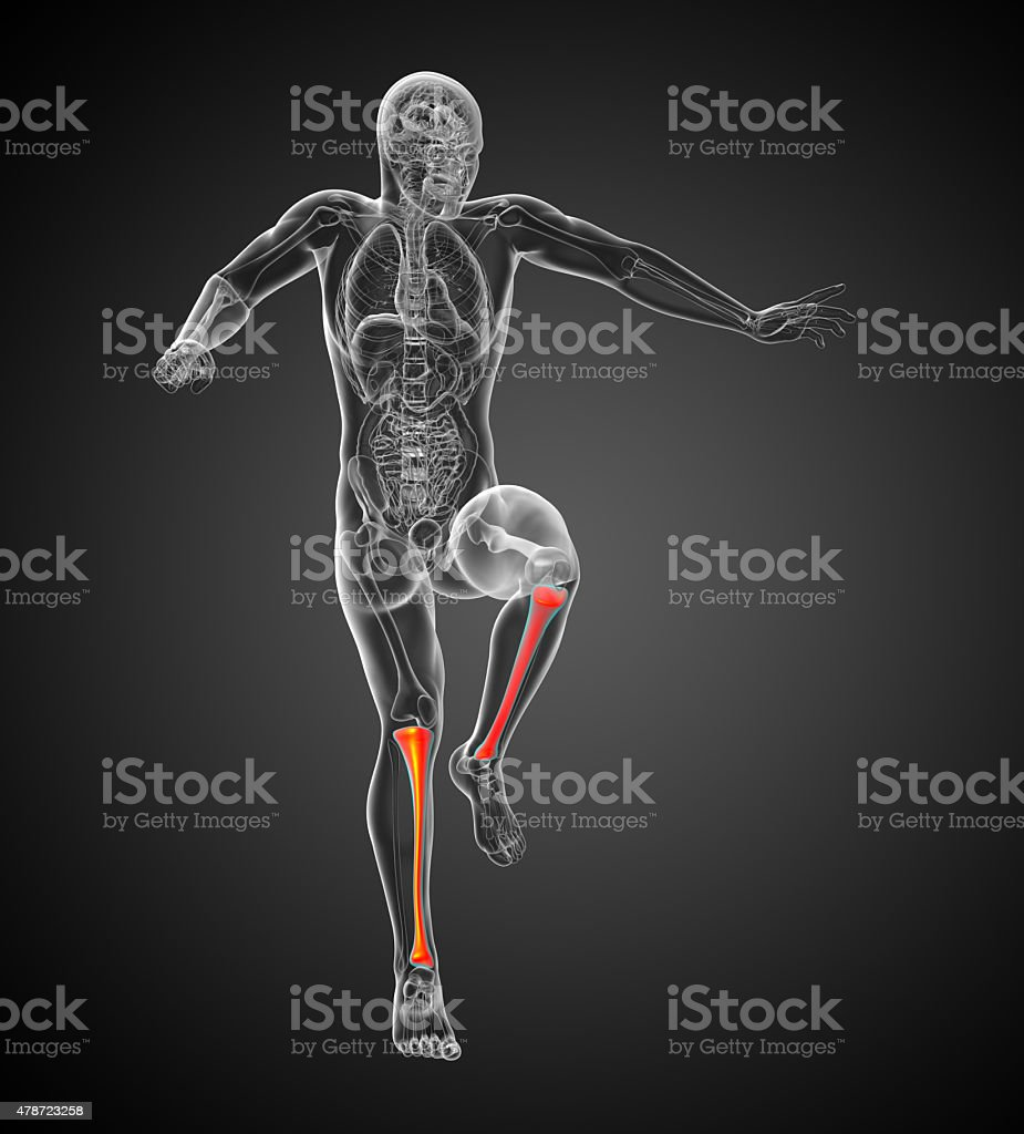 3d render medical illustration of the tibia bone stock photo