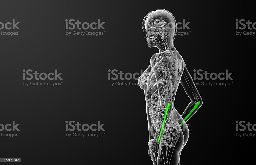Ulna Diagram 3d Electrical Work Wiring Diagram