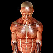 istock 3d render of a male muscular anatomy 539096588